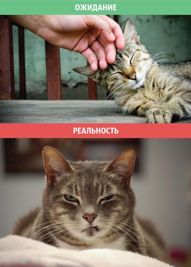 Koty-ozhidaniya-irealnost-10-foto