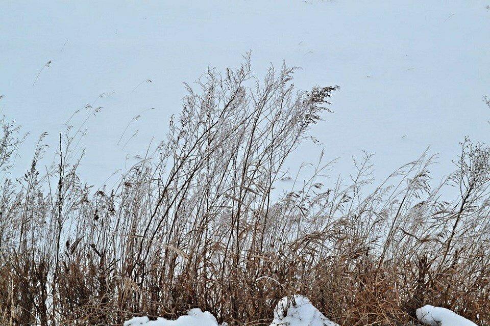 зимняя природа