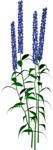 Flowers1-DarknessSparkles.png