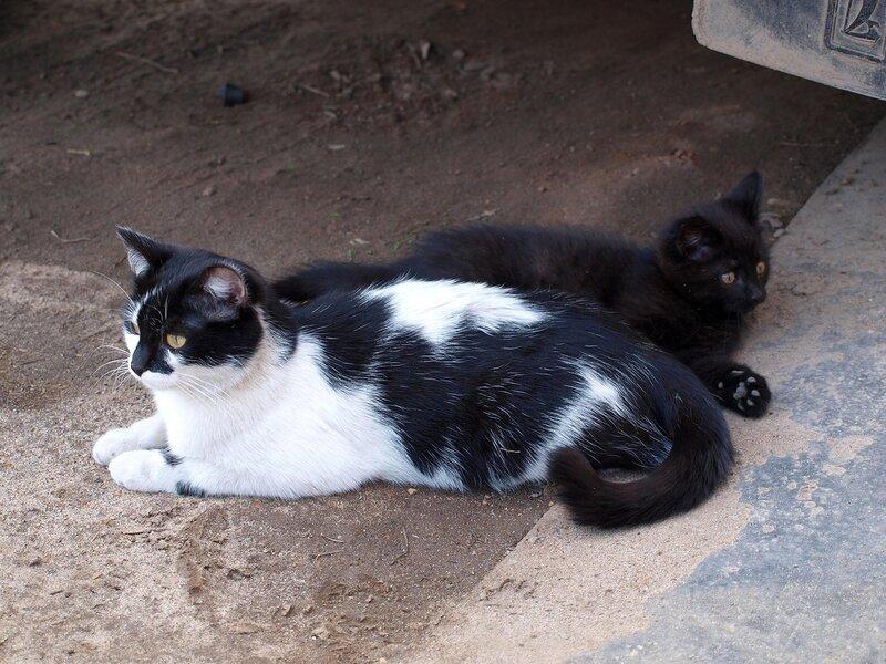 Кошки и котята спасателей P4281377.jpg