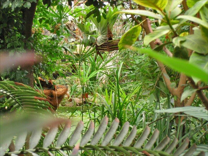 Участок тропического леса