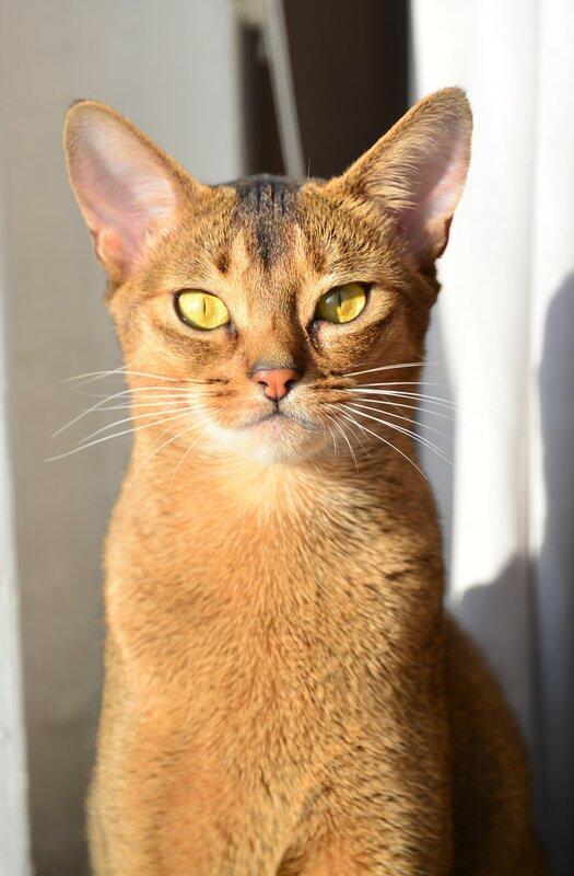 Кошка-статуэтка