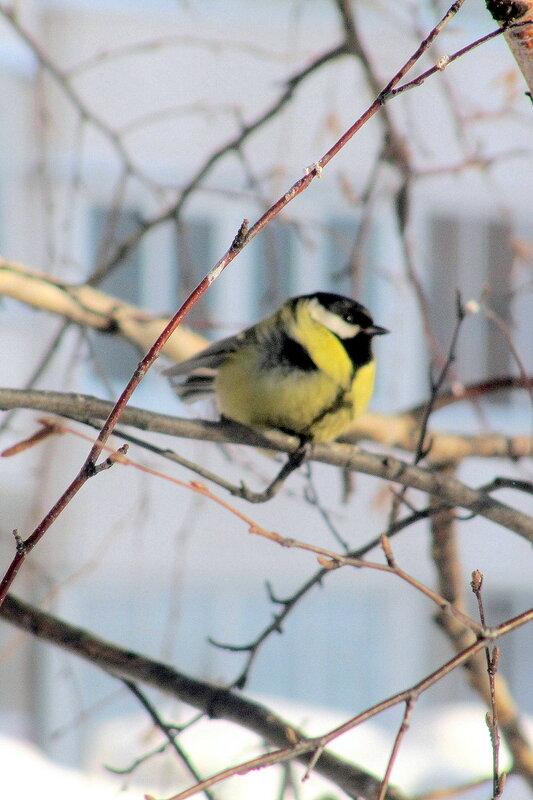 Птицы в мороз