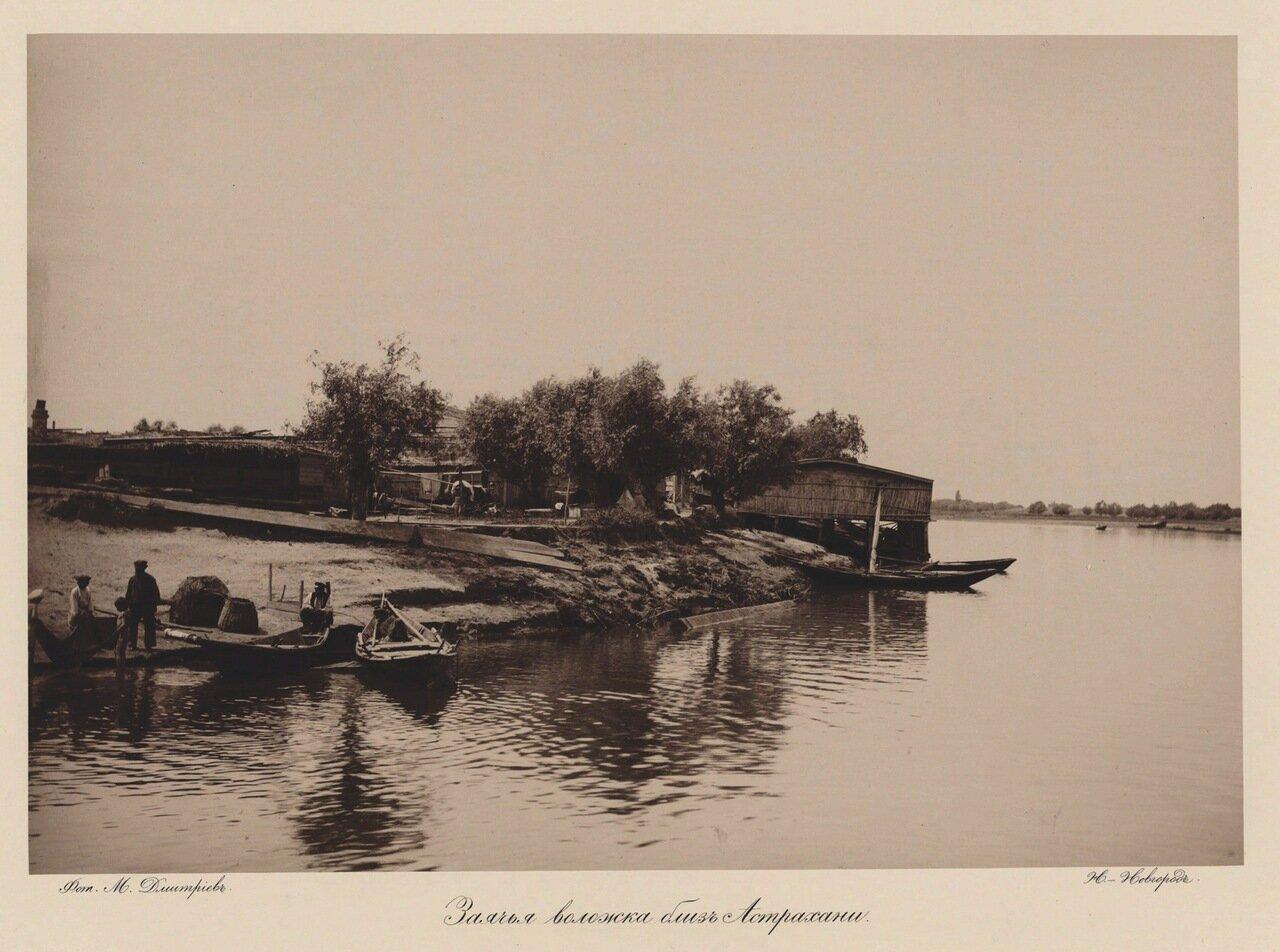 Заячья воложка близ Астрахани. 1890
