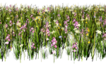Lug_Grass_Flower (20).png