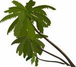 пальмы зелёные.jpg
