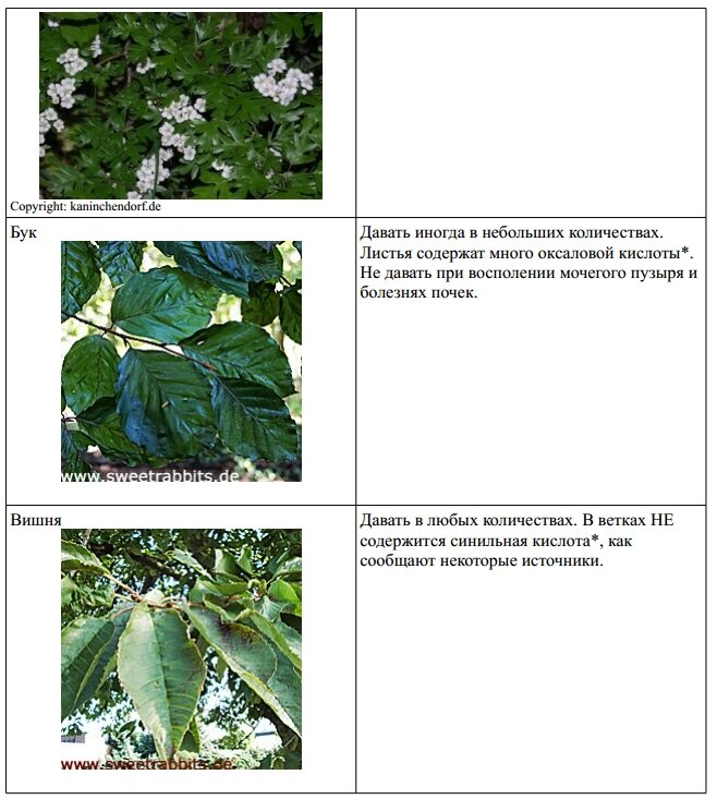 Веточный корм. 0_9c94d_380590ca_XL