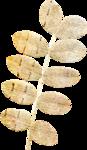 kcroninbarrow-coloroutsidethelines-leaf1.png