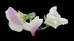 natali_design_baby11_flower12-sh1.png