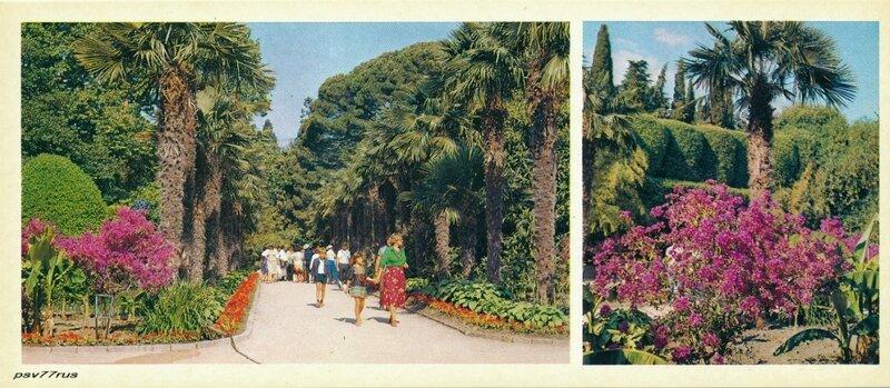 Аллея веерной пальмы.  Уголок Нижнего парка.