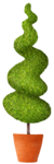 CaliDesignForourLife_Elements (27).png