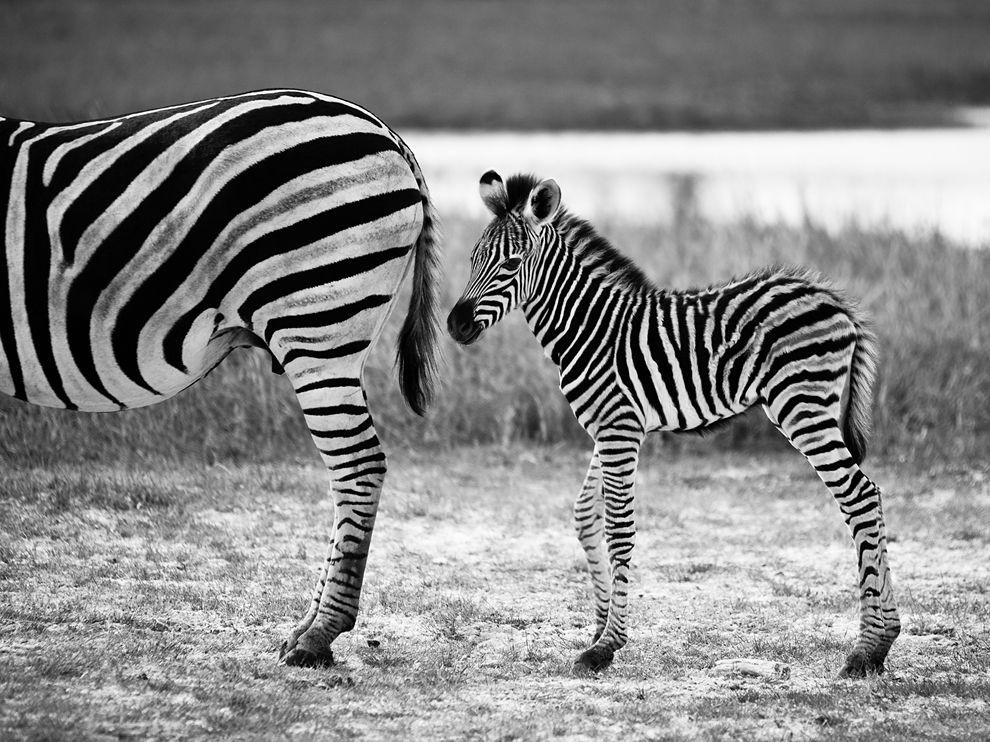 Лучшие фотографии за январь от National Geographic (2013)