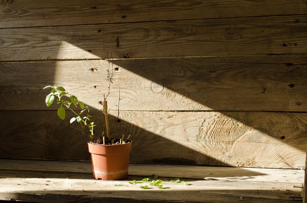 Натюрморт, снятый при естественном освещении из окна. Вариант 2. Уроки фотографии на Никон Д5100 КИТ 18-55.