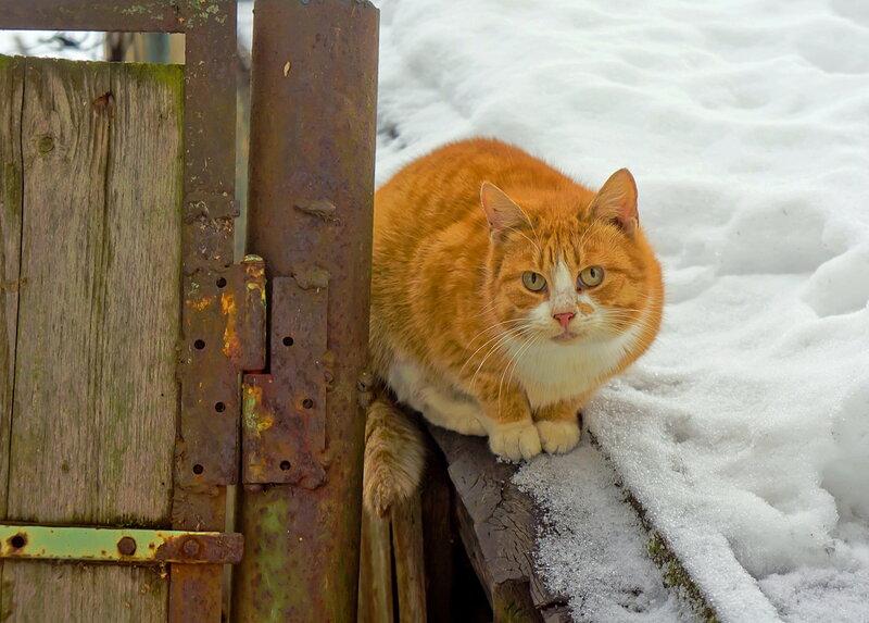 Рыжик-охранник