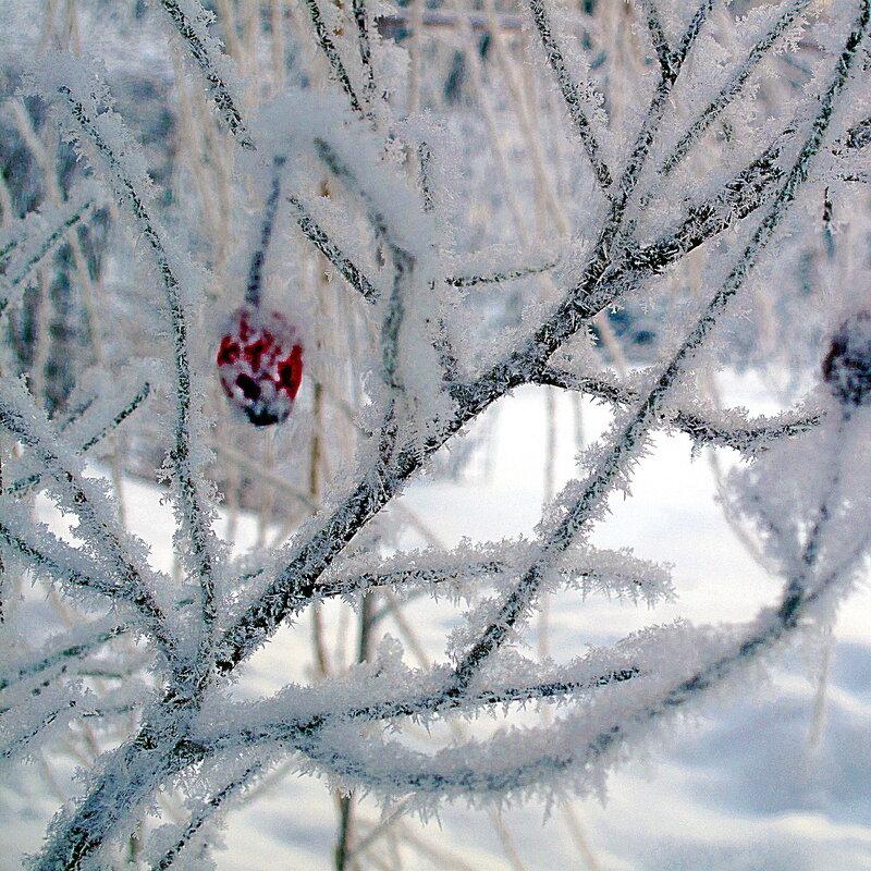 Зима в Острове