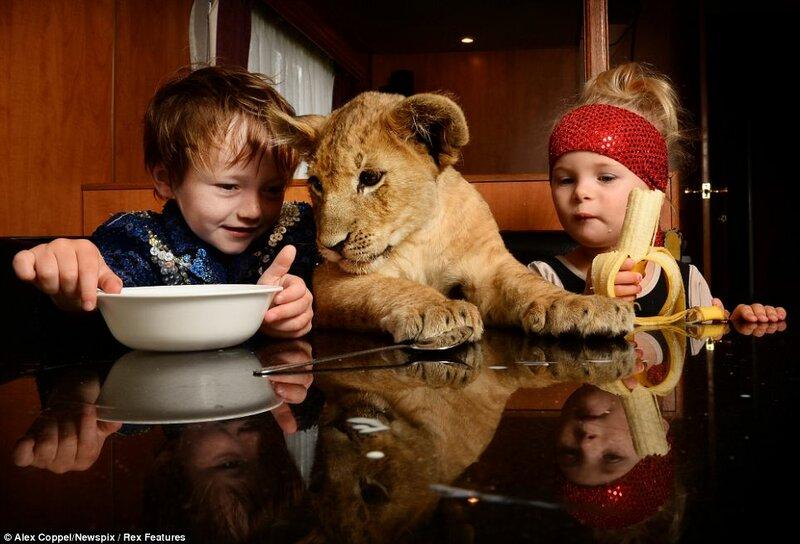 Маленький циркач и львенок Цимби