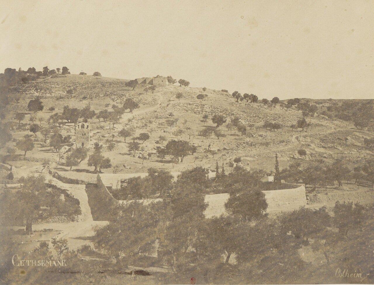 Гефсиманский сад. Иерусалим