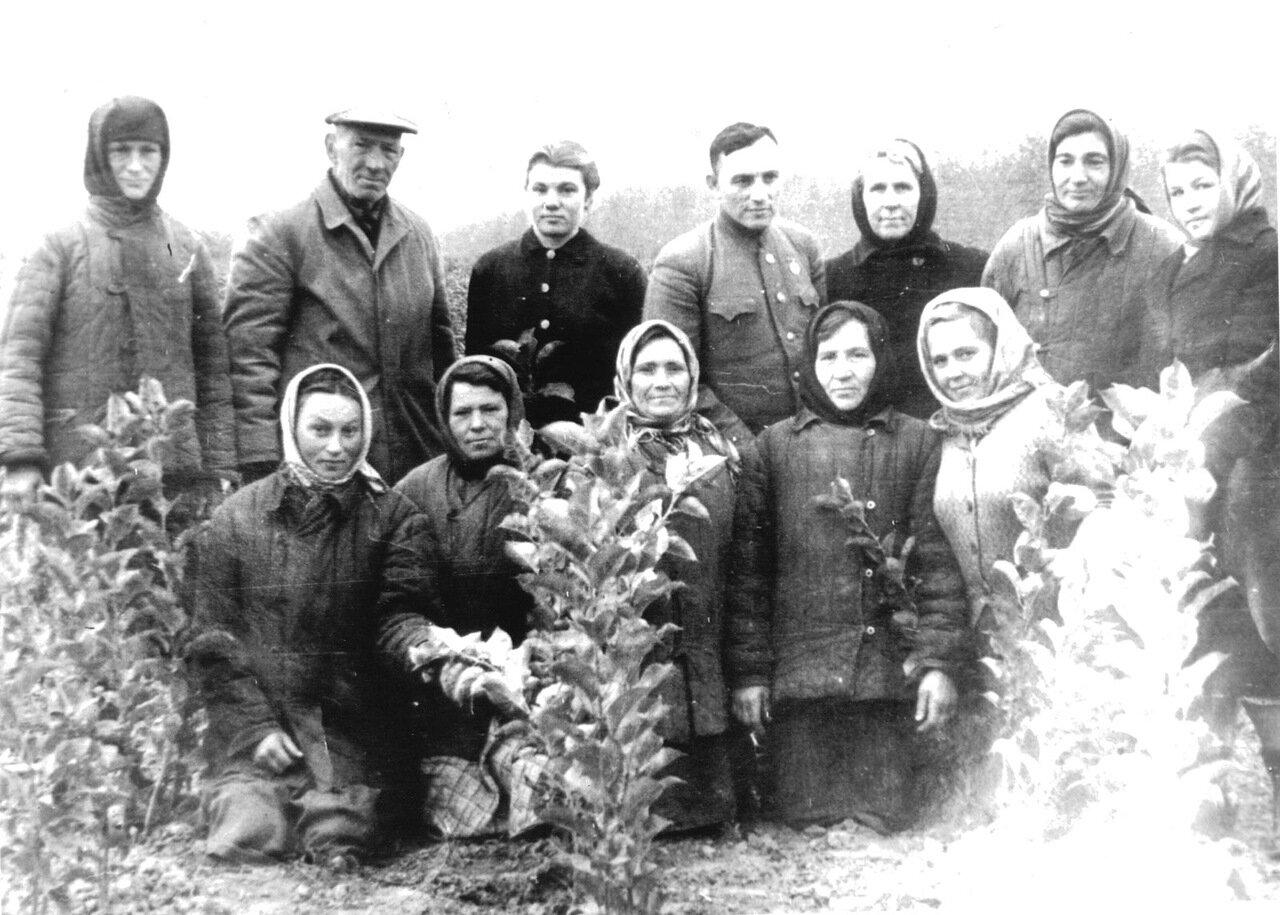 М.Н.Годин во втором ряду второй слева с бригадой питомника