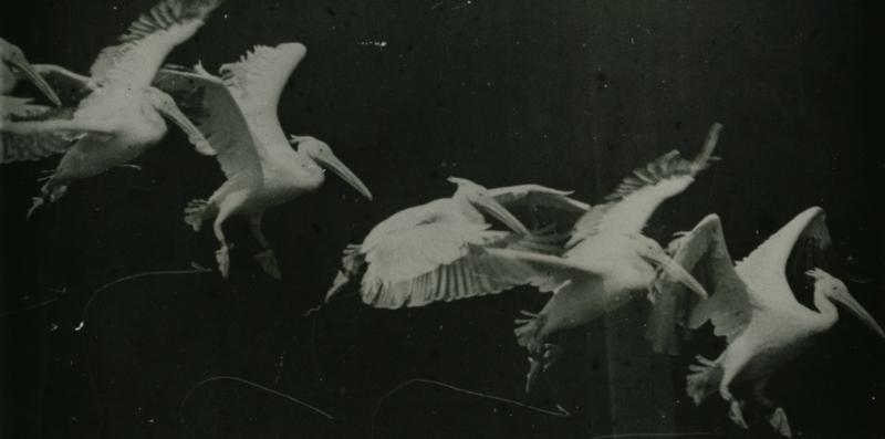 Marey_-_birds.jpg