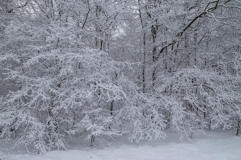 1. Зима по Краснодарски.