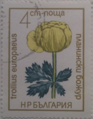 болгария желт цветок 4ст