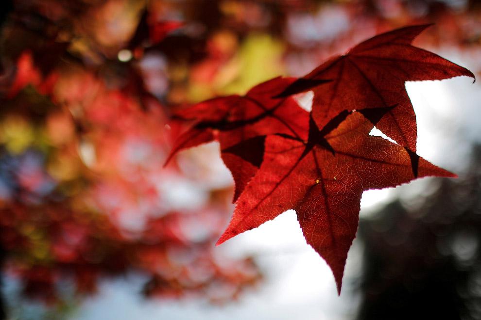 17. Невероятные краски в парке Thacher State Park, Нью-Йорк, 18 октября 2016. (Фото Mike Groll)