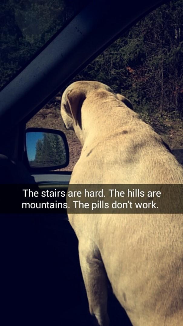«Ступени — испытание. Холмы стали горами. Лекарства не работают».