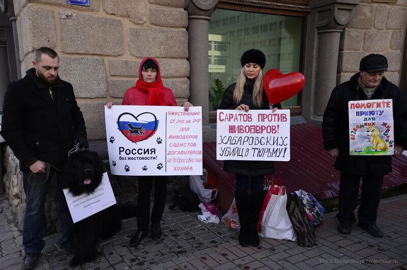 Пикет за ужесточение наказания живодеров, Саратов, 05 ноября 2016 года