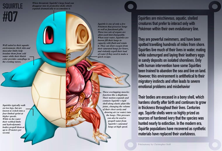 PokeNatomy - Quand un illustrateur devoile l'anatomie des Pokemon
