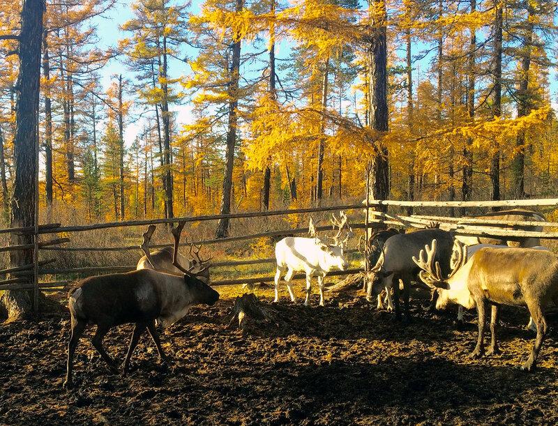 белый олень в говне.jpg