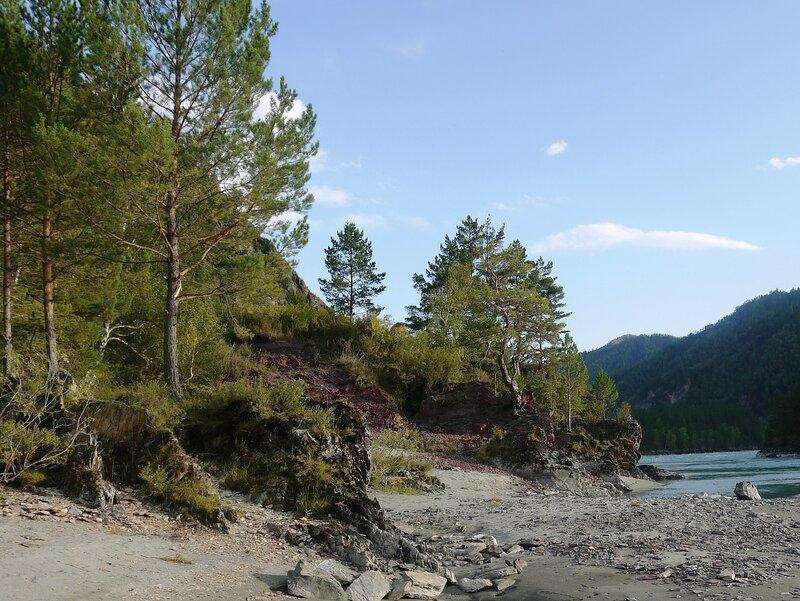 Алтай. На реке Катунь.jpg
