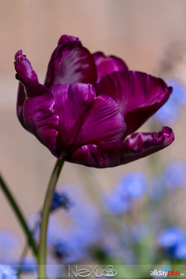 Я люблю все цветы, выпуск 128.