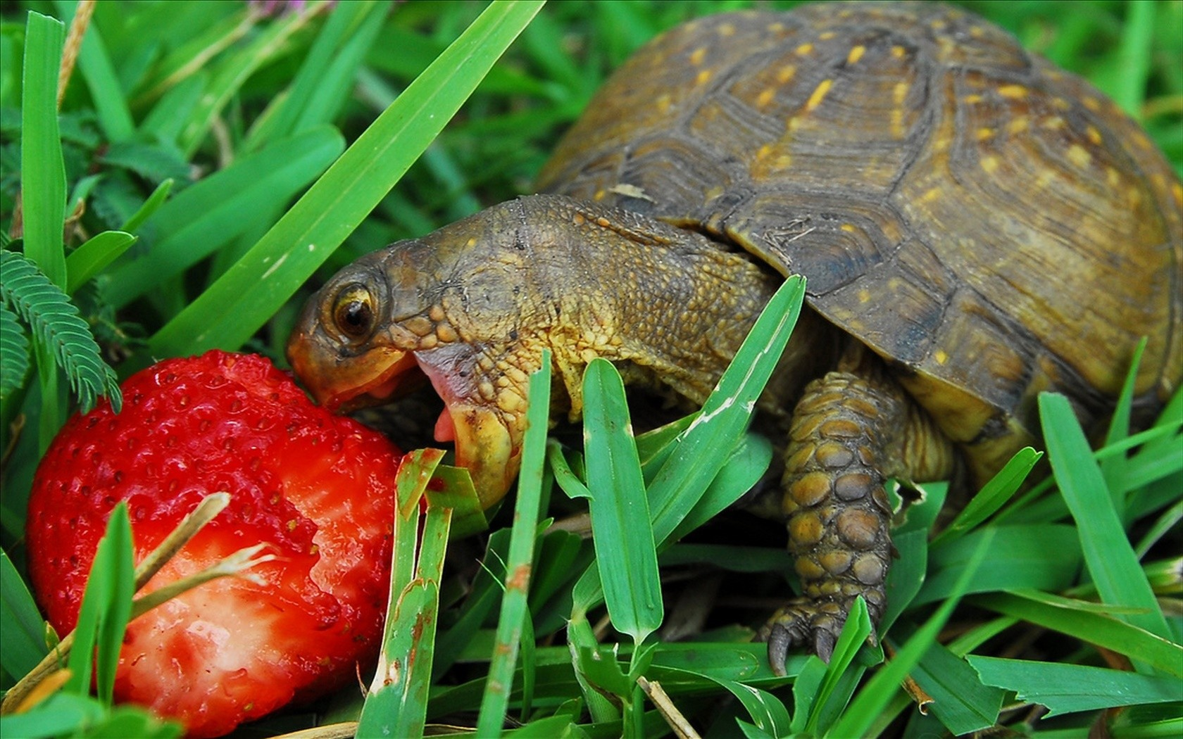 Щастя черепахи