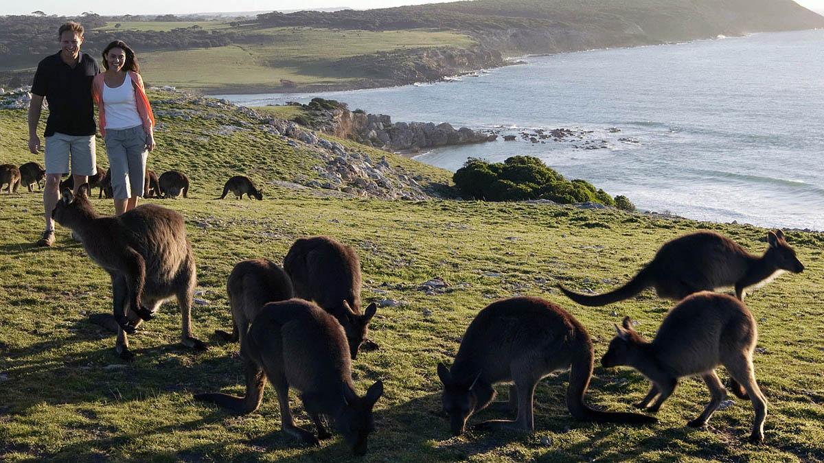 Третья часть этого острова занята природными заповедниками и парками. Конечно,