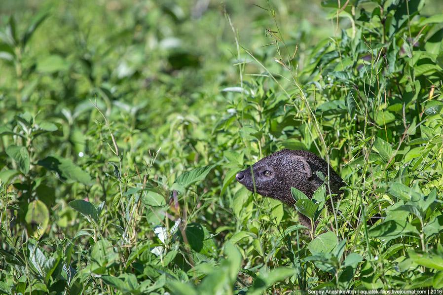 17. Одна из фишек Нгоронгоро, которую хотят увидеть все — носорог. К сожалению, близко его увид