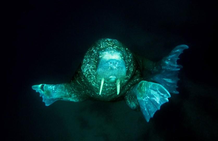 15. Ледник Норденшельда. И бухта, и ледник названы в честь Адольфа Эрика Норденшельда, шведского уче