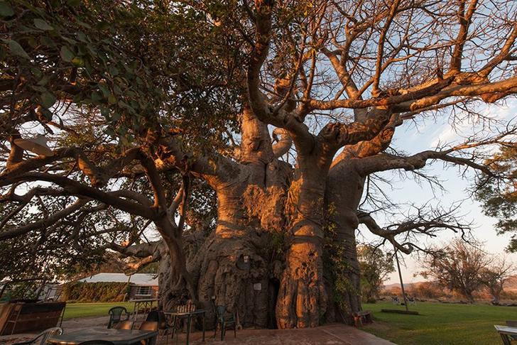 Идете Вы по улице и видите дерево. Большое, да, но все же просто дерево. Вы решаете обойти его и
