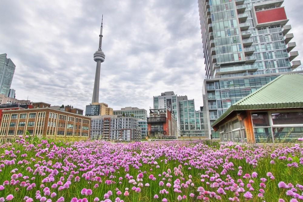 Магазин в Торонто Все здание построено с учетом зеленых технологий, но в крыше — особая прелесть. Мо