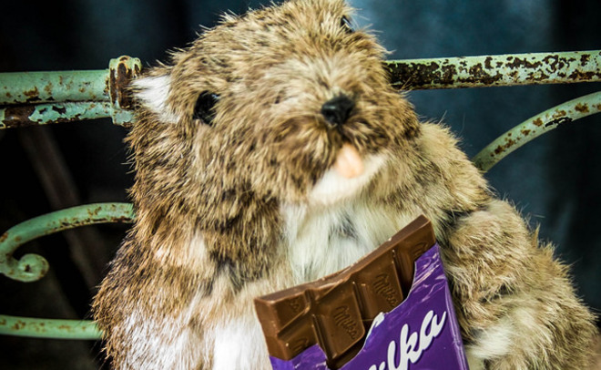 Всети возникла вакансия дегустатора шоколада Milka
