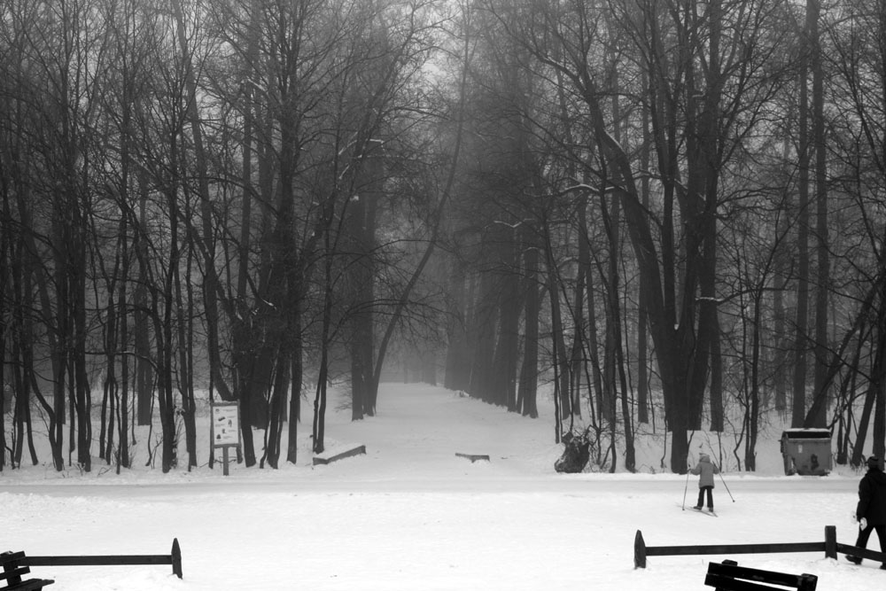 Зимний туман в Битцевском лесу