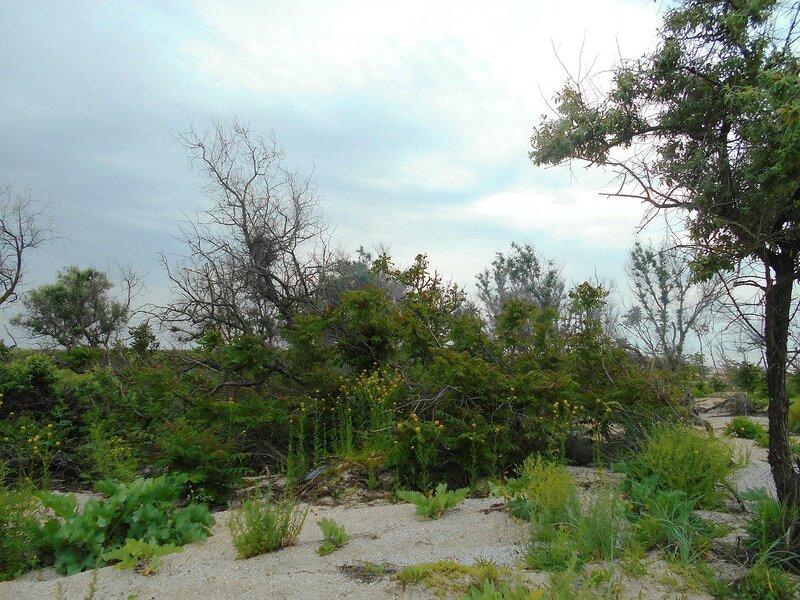 Обилие весеннее, растительное ... DSCN5875.JPG