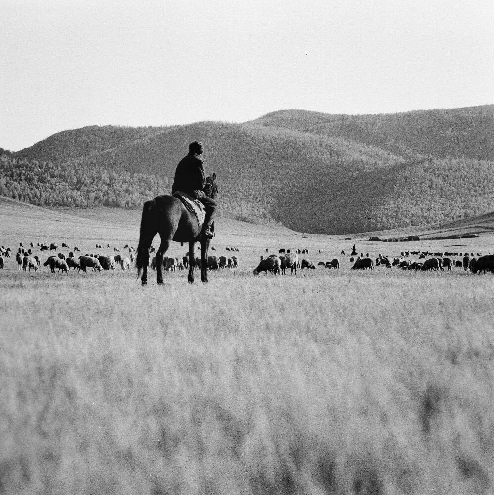 Пастух и его стадо