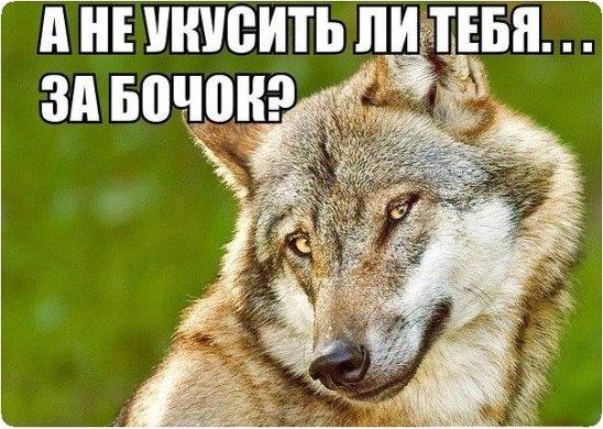 ochen-tolstih-ebut-v-zhopu