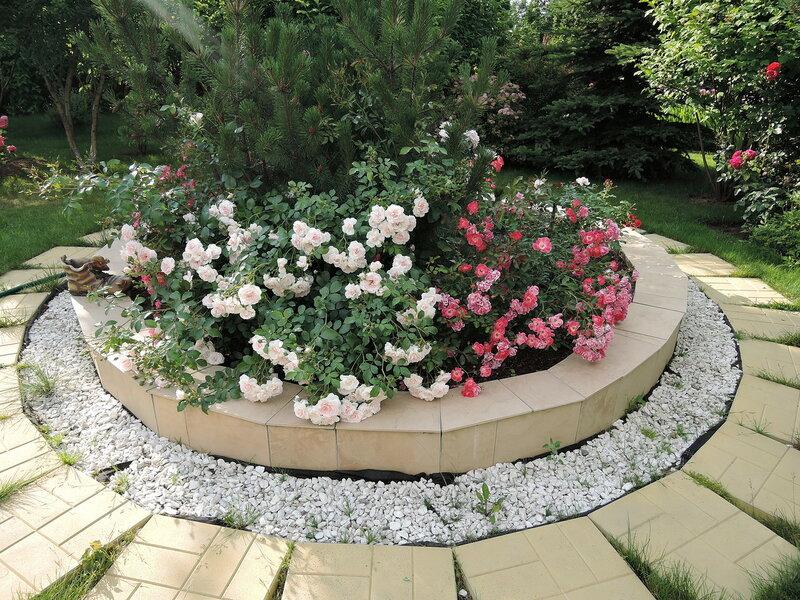 Восторг от красоты, сад роз в Подмосковье