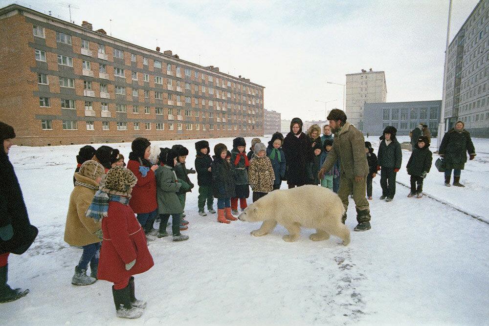 Polar bear cub Aika on a daily walk with documentary filmmaker Yury Ledin in Norilsk, in 1974.jpg