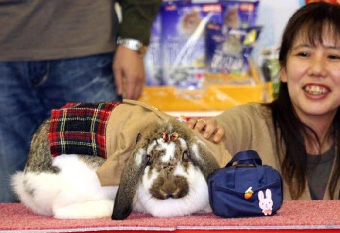 Милые кролики в забавной одежде