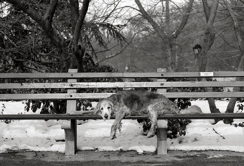 Купер, 15 лет, Нью-Йорк.