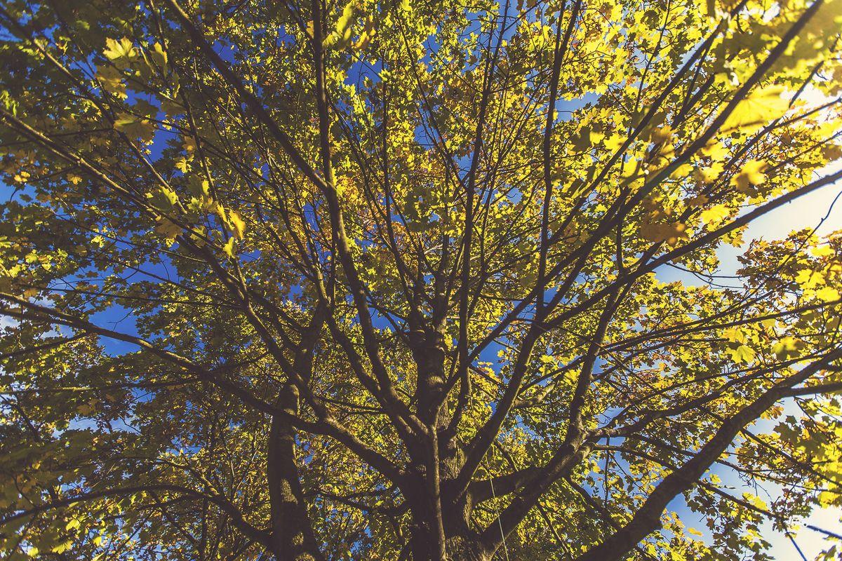 Осень. Abano Terme.