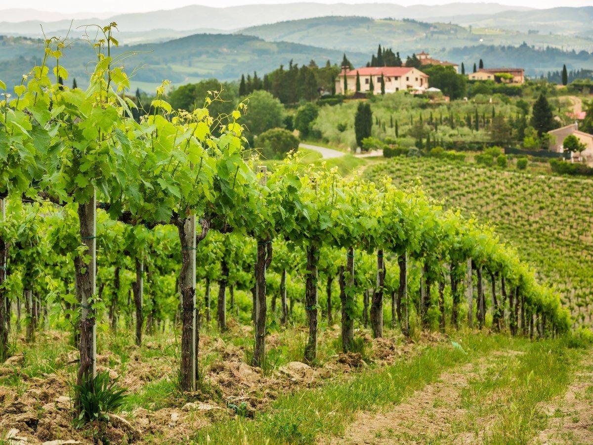Тоскана с ее бесконечными виноградниками — один из самых живописных регионов Италии. Берите пешие ту