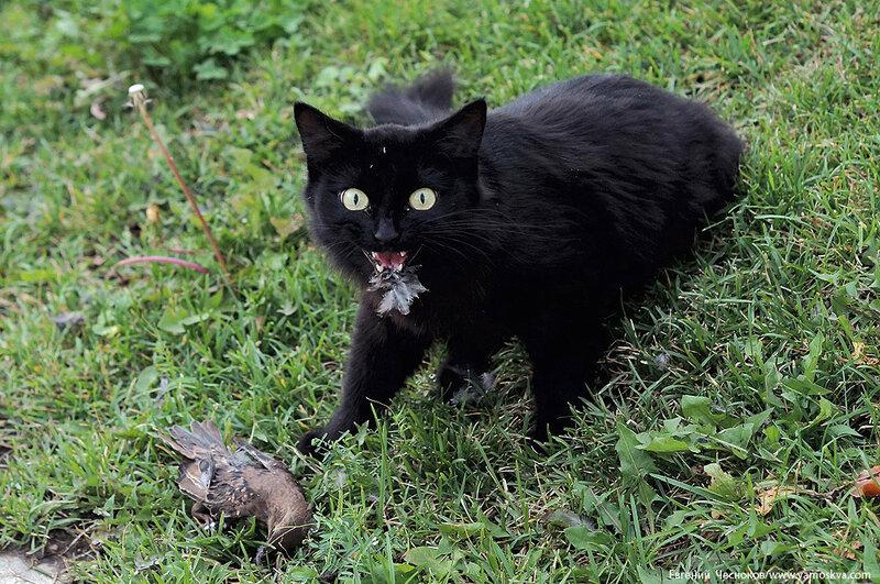 56. Красная Пресня. кошка. 20.08.16.02..jpg